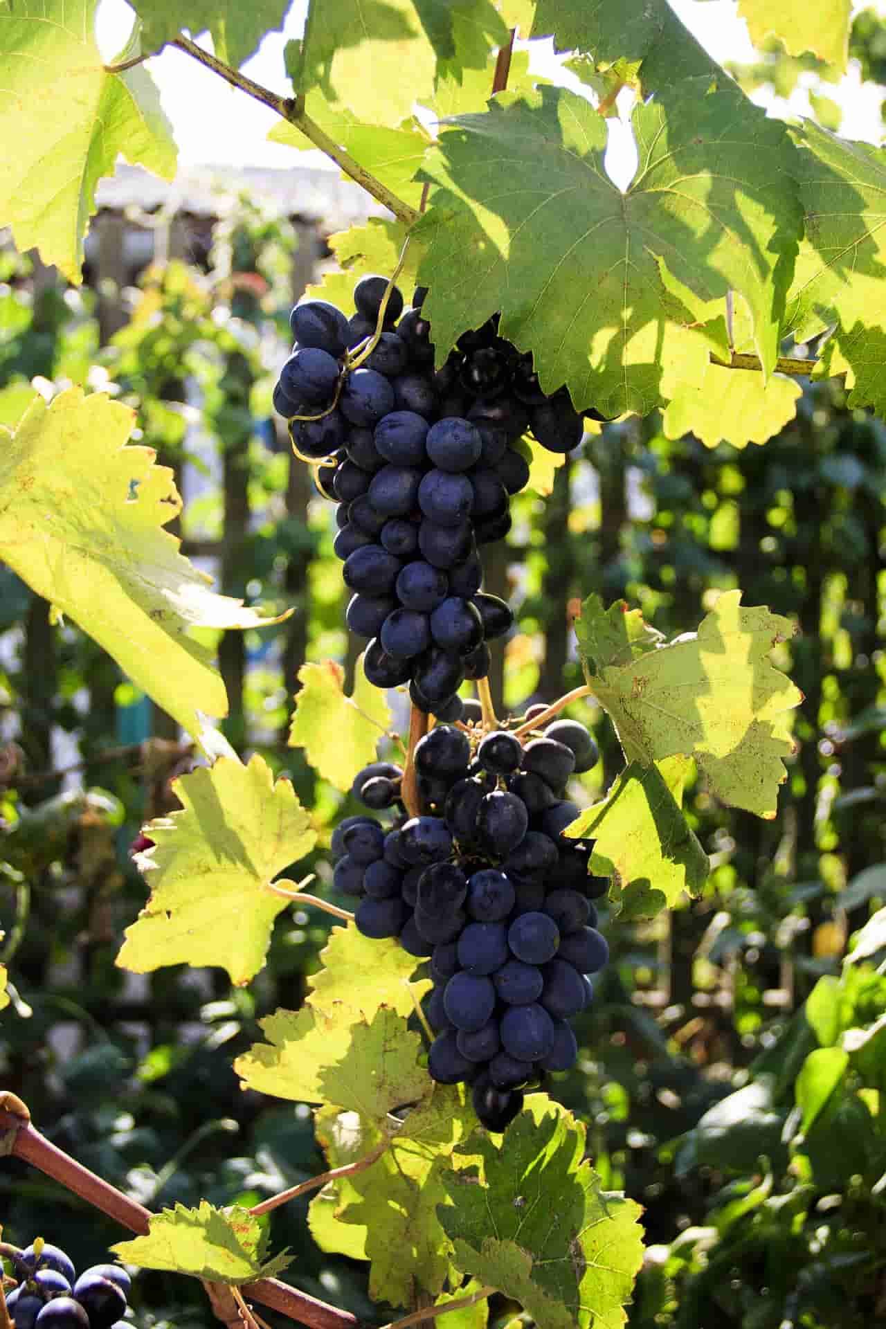 Z wizytą w następnej winiarni