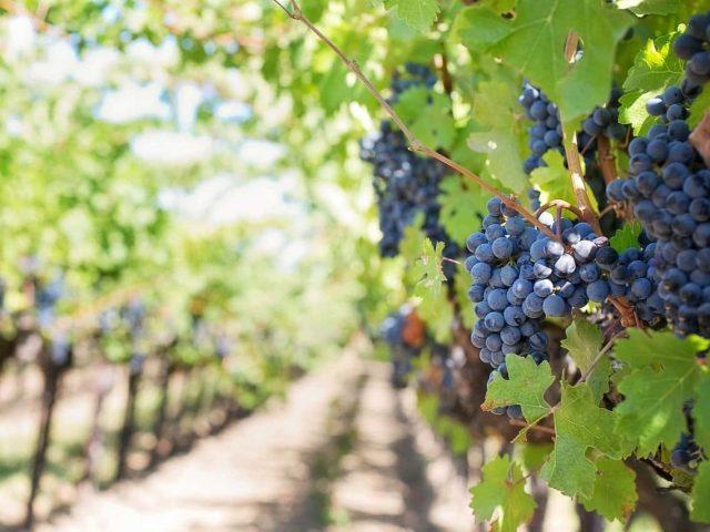 Winnice w Mołdawii